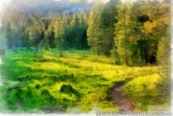 Summer Forest Nature Painting